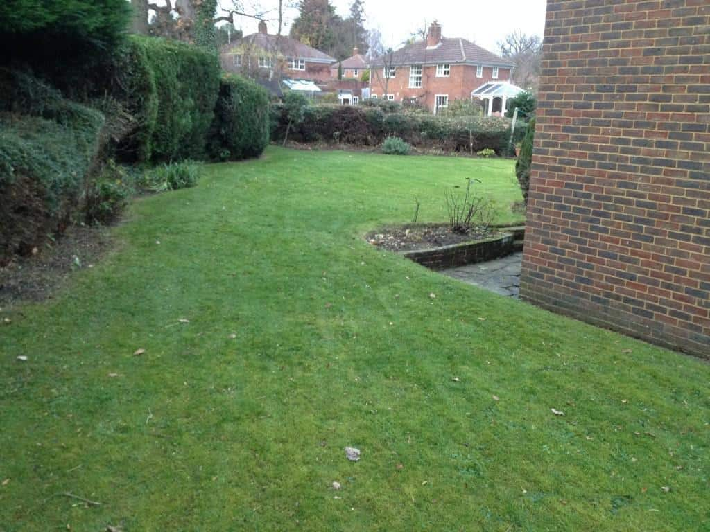 Hedge trim and general tidy up bracknell tidy gardens for General garden maintenance